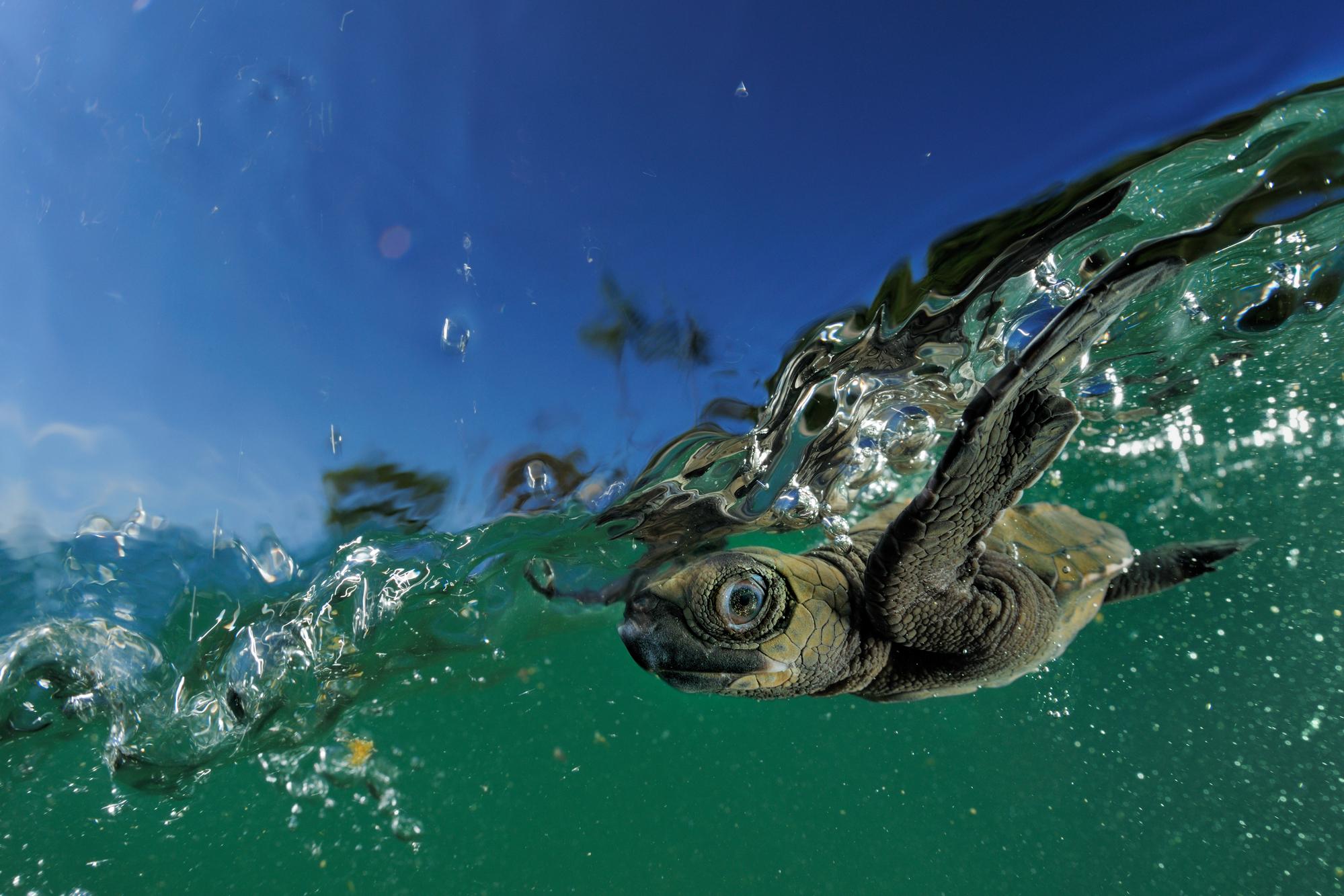 world sea turtle day wwf