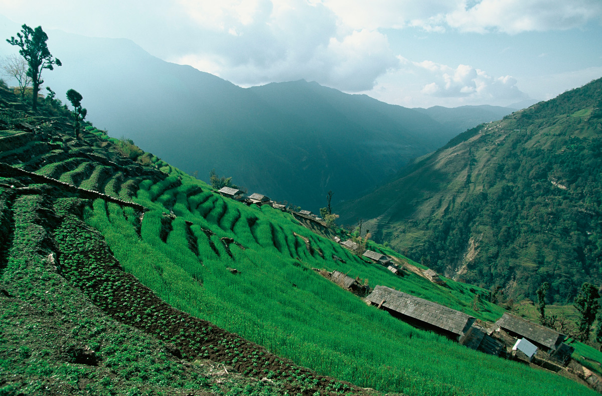 Little village in rice fields. Annapurna Conservation Area, Nepal
