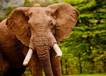 Support the 2018 London Conference on illegal wildlife trade.