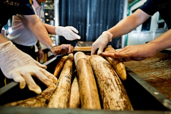 Confirm long-term funding for the UK's National Wildlife Crime Unit to fight illegal wildlife trade.