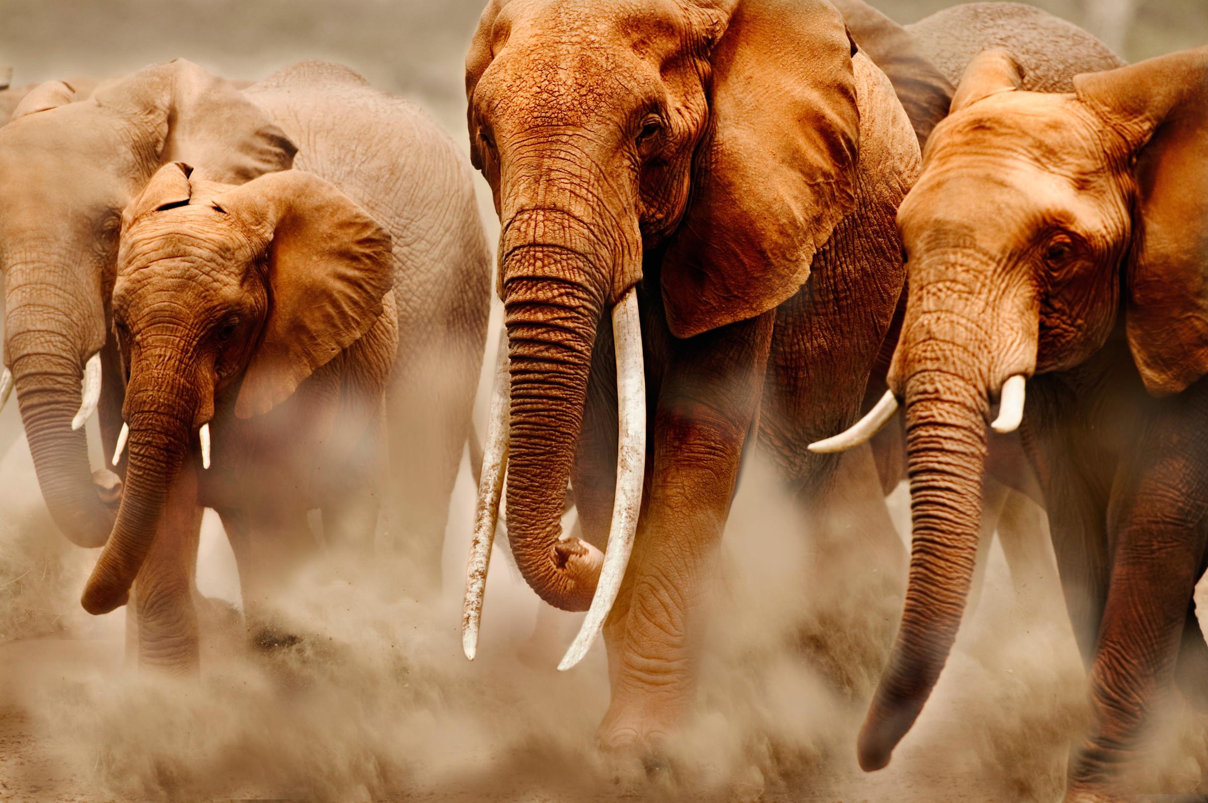 World elephant day help stop ivory trade wwf biocorpaavc Gallery