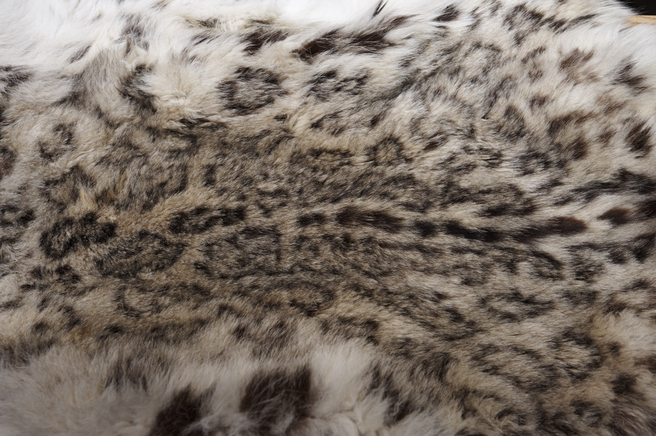 A snow leopard pelt from a poached snow leopard