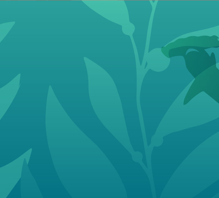 Green shark background