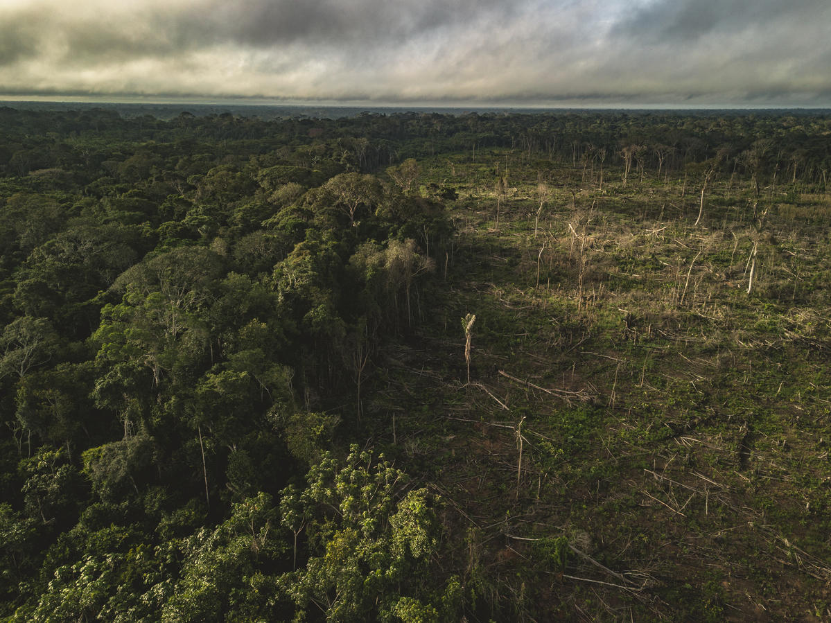 Showing the devastation caused by logging in the Amazon rainforest