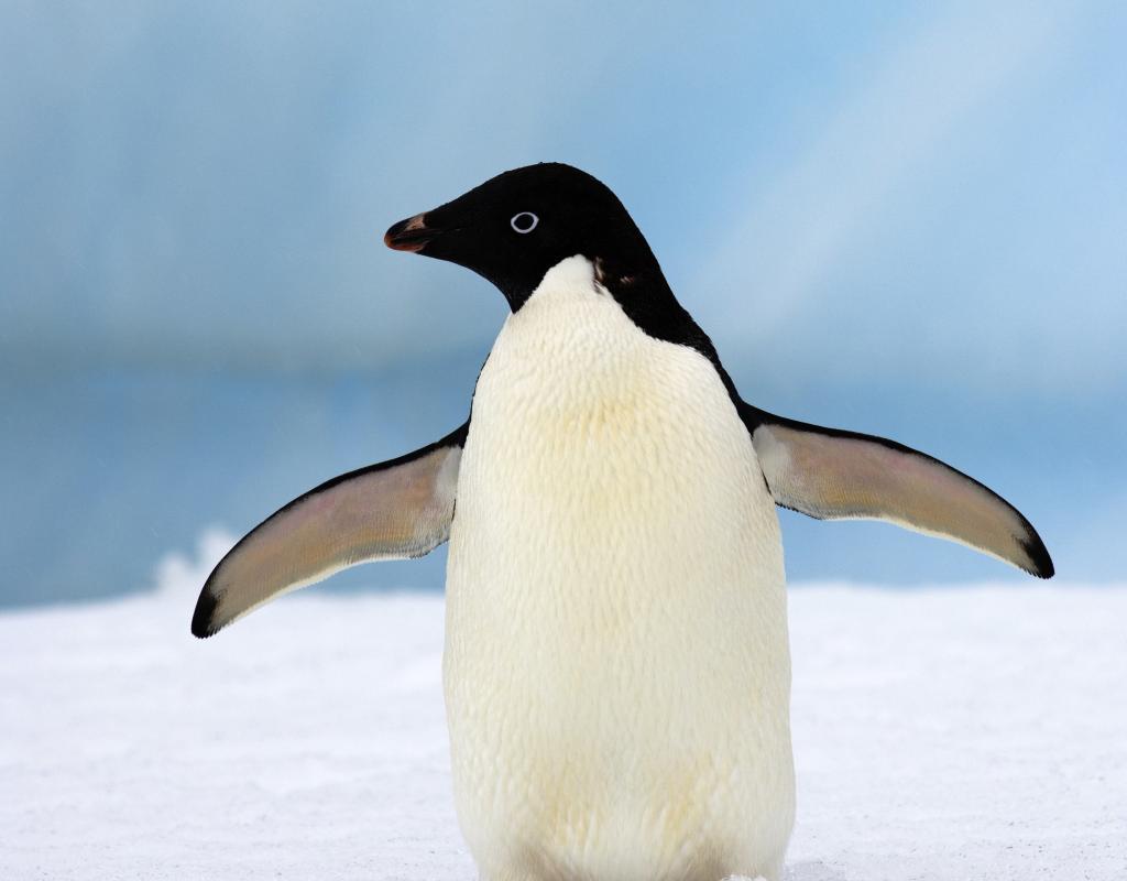 adélie penguins wwf