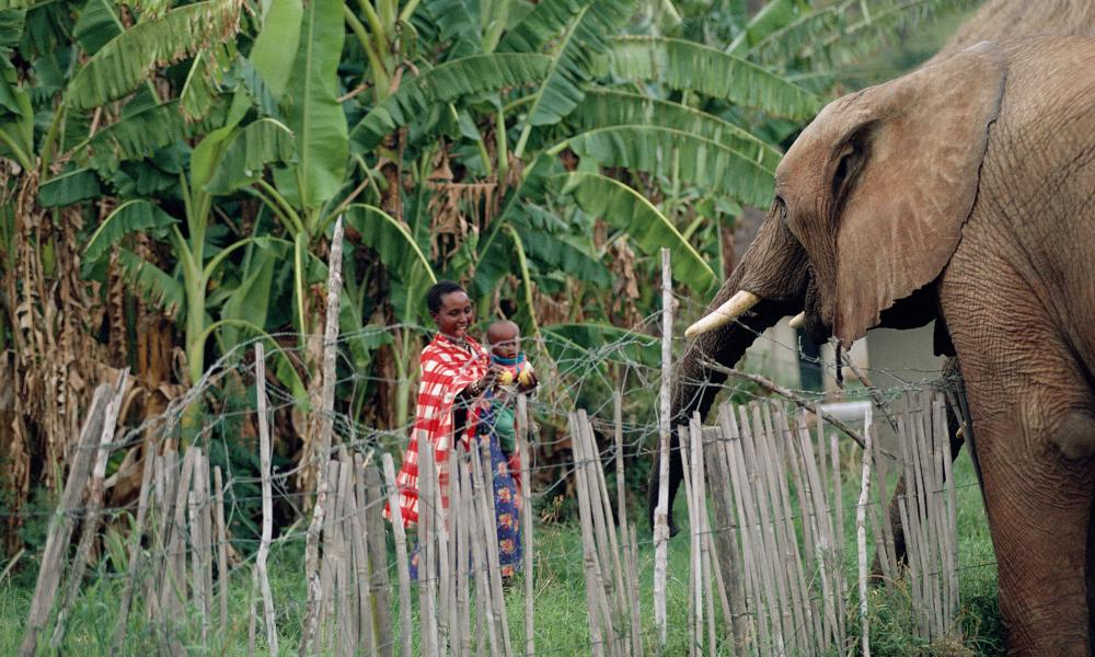 human elephant conflict The asian elephants and associated human-elephant conflict in south-eastern bangladesh.