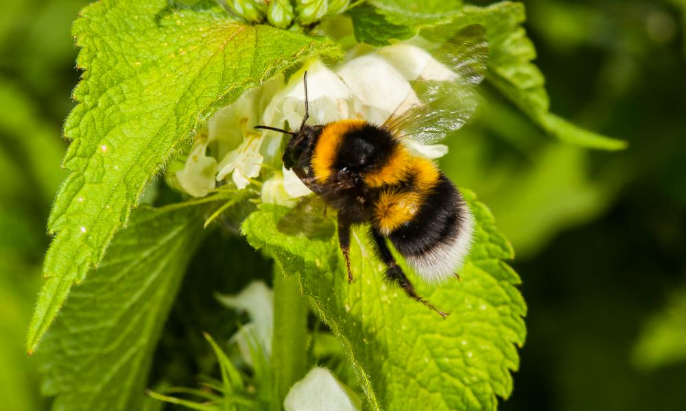 Bees feel the sting of climate change in the East of ...