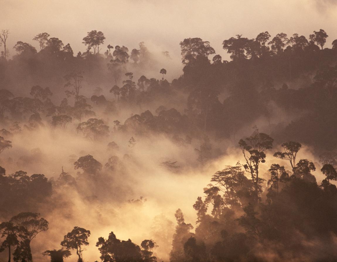 how are orang utan populations under threat It may not be too surprising that there are no orangutan the majority of orangutan habitat in borneo is under threat populations of orangutans have.
