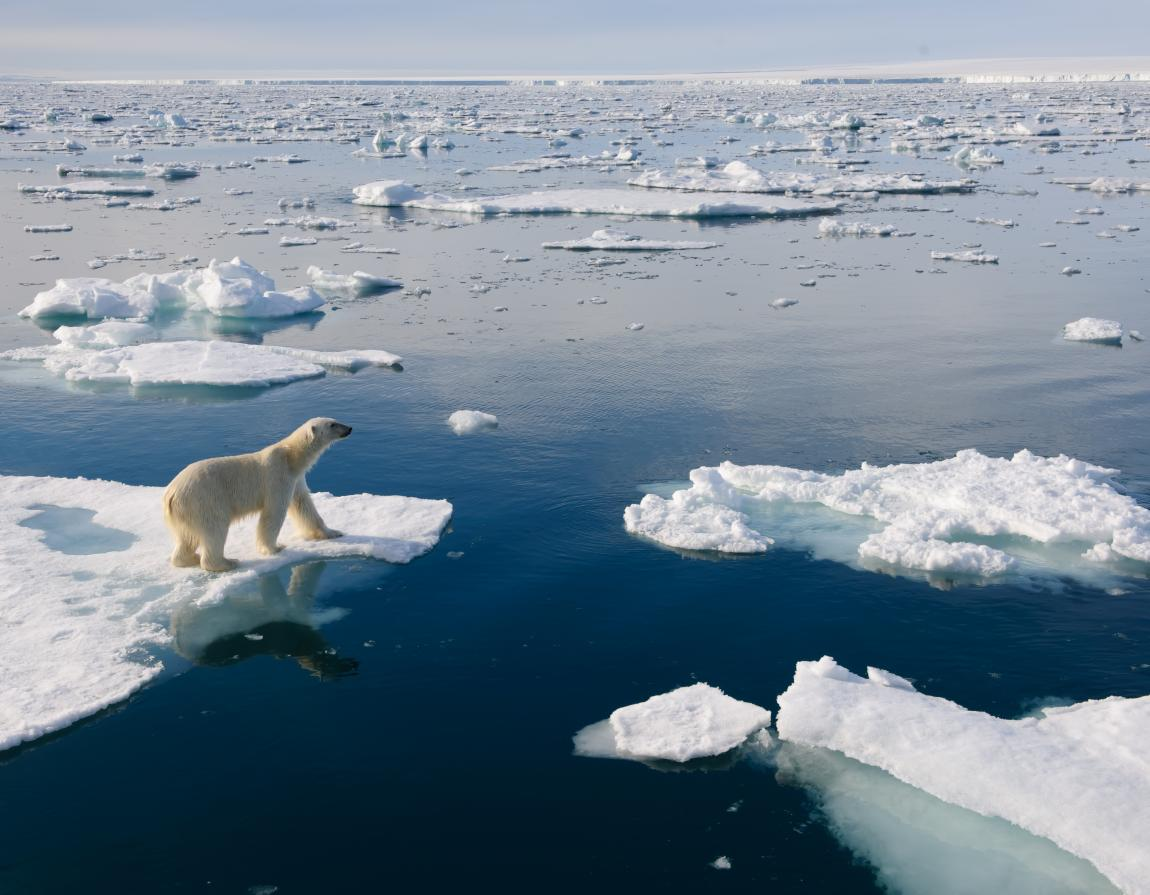 11 Facts You Didn't Know About Polar Bears