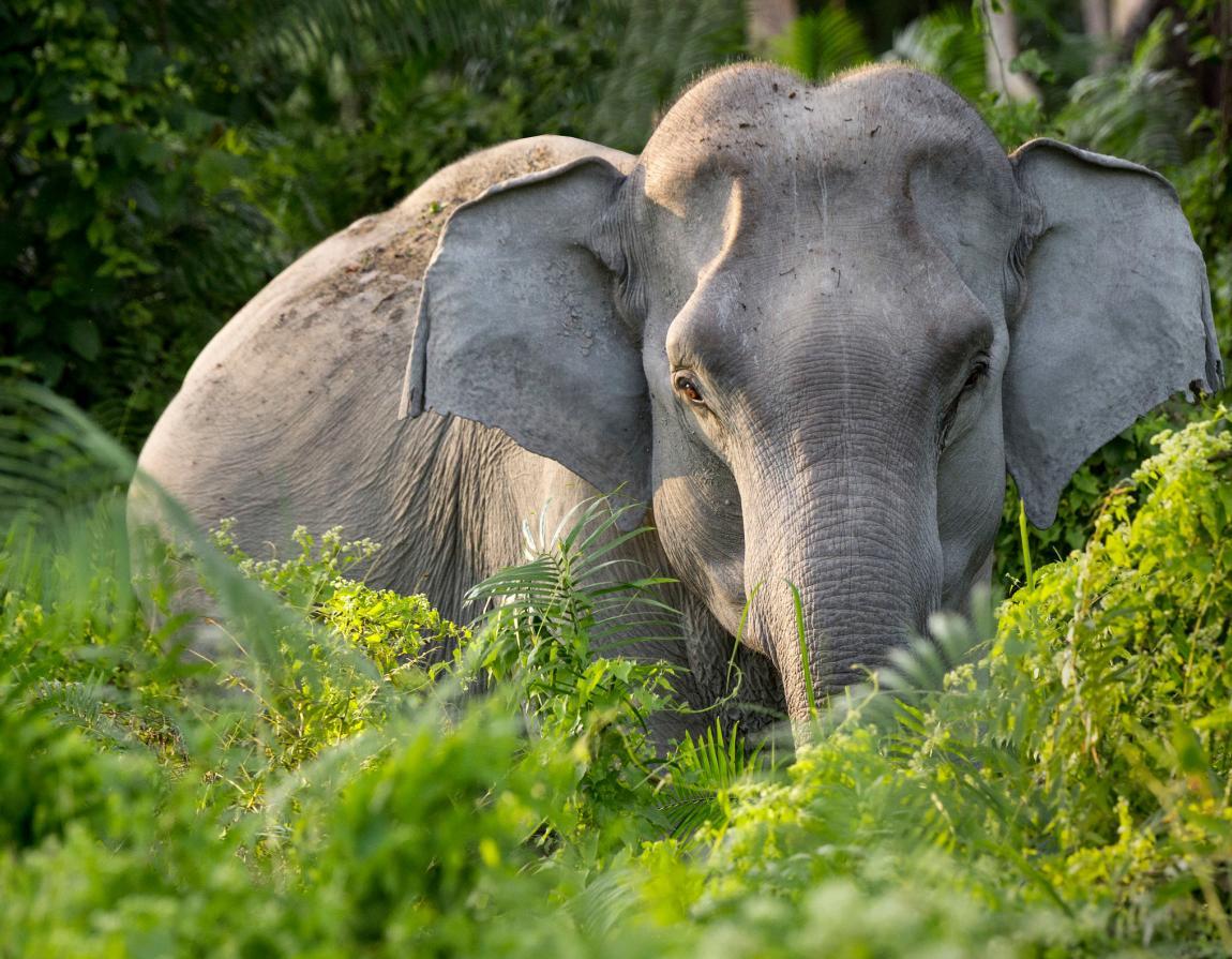Top 5 endangered animals