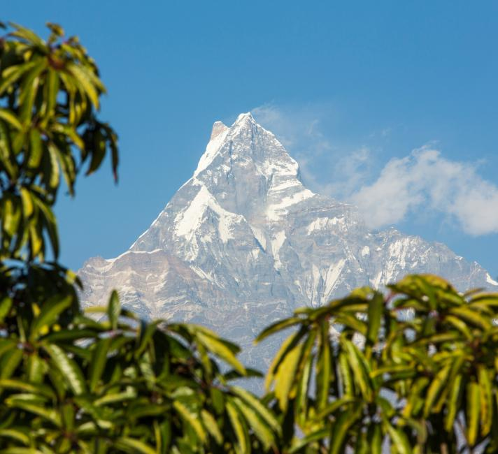 Machapuchare peaking out behind forest