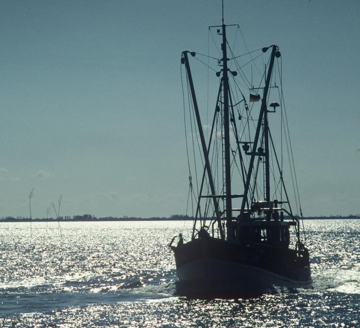 Fishing boat, Wadden Sea