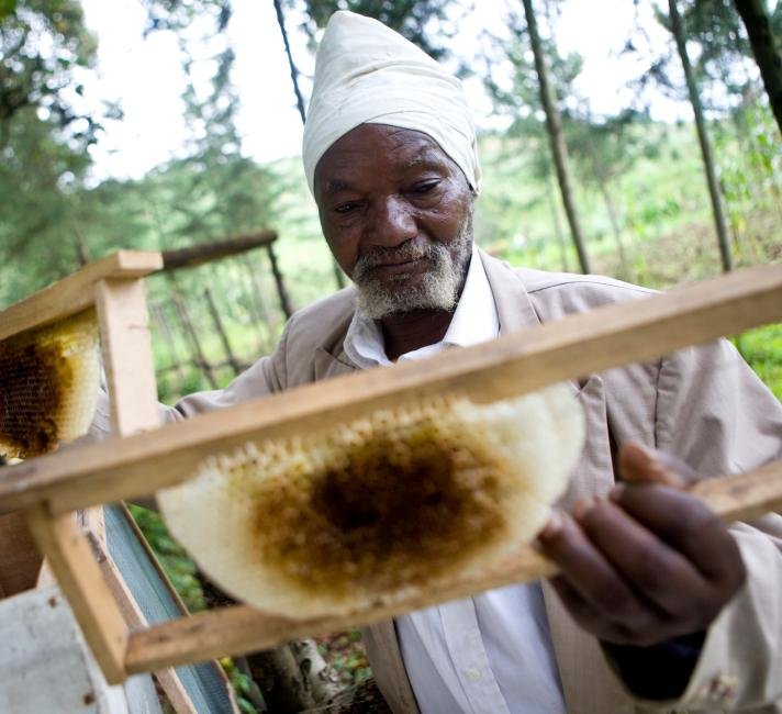 Kenyan man inspects bee hives