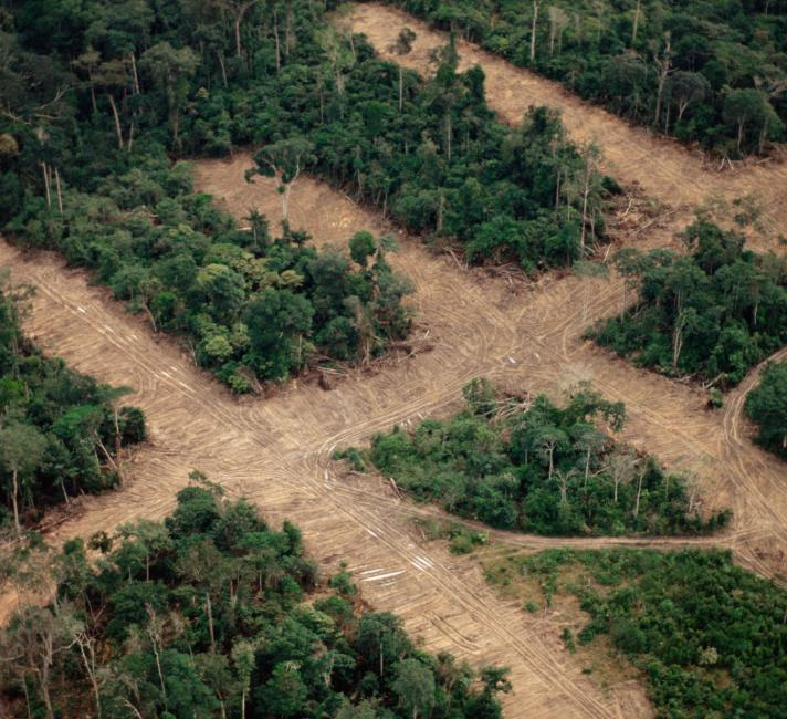 Area of deforestation