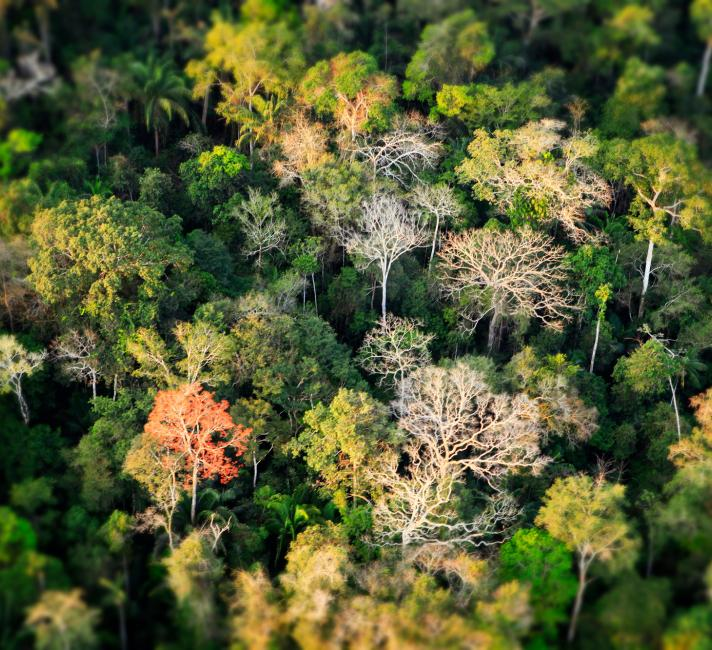 Aerial shot of Amazon rainforest in Acre, Brazil