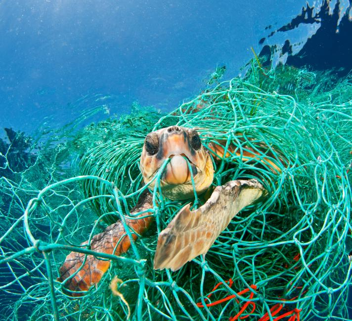 Loggerhead turtle trapped in a drifting abandoned net