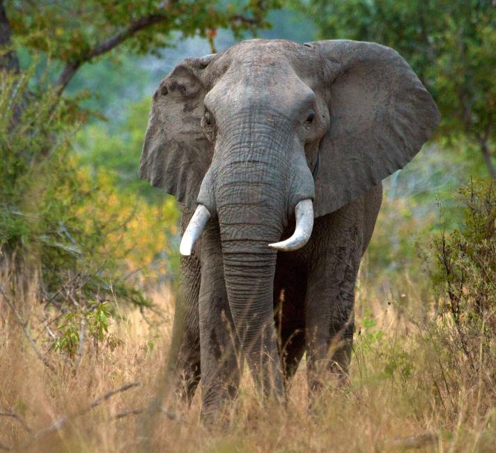 Elephant at Selous