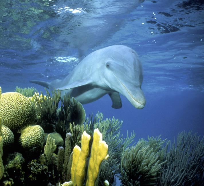 Image result for dolphins in the wild