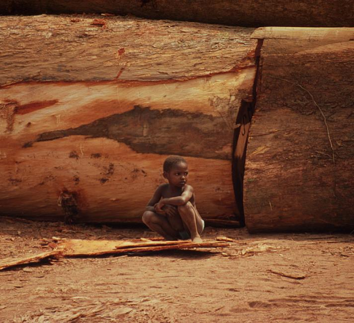 Little boy sitting in front of felled logs