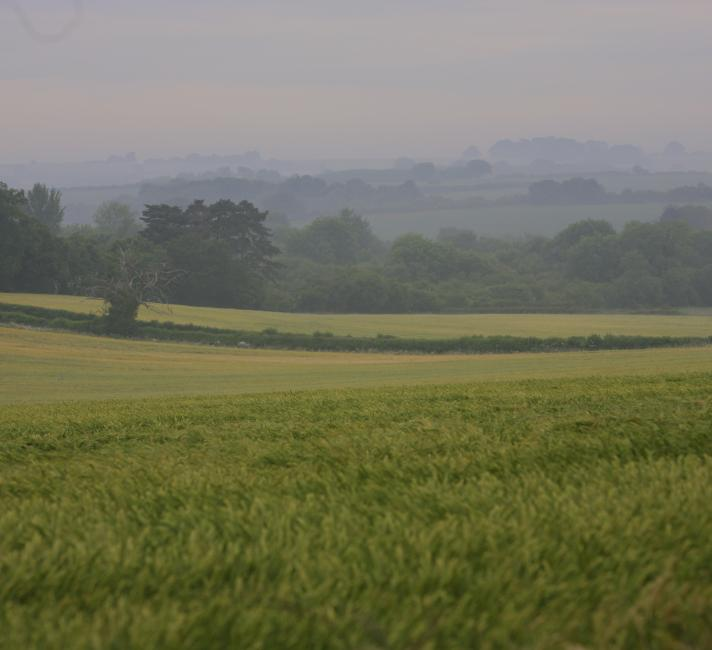 Hampshire fields
