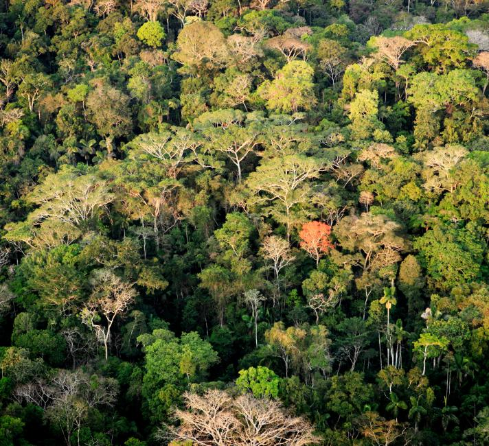 Amazon rainforest in Acre, Brazil © Greg Armfield / WWF-UK