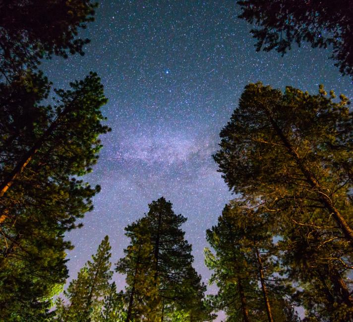 Starry sky in the forest