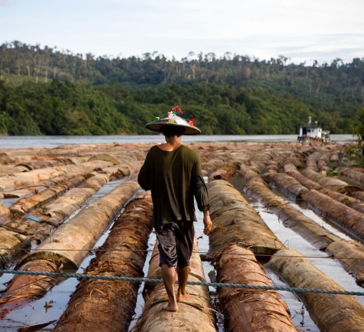 PT Ratah Timber, base camp for 97,690 Ha of concession. Logs are being rafted to be sent to a plywood processing plant, East Kalimantan, Borneo © WWF  Simon Rawles