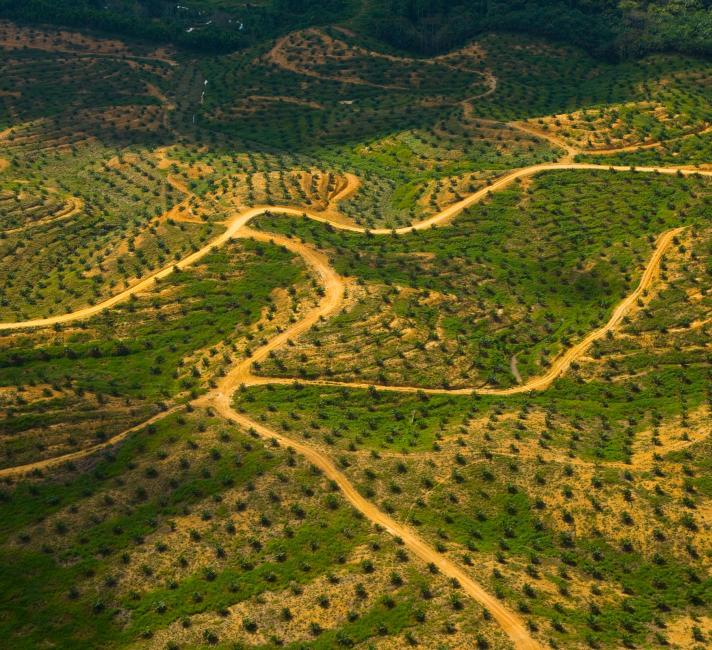 Aerial view of palm oil plantation © naturepl.com / Juan Carlos Munoz / WWF