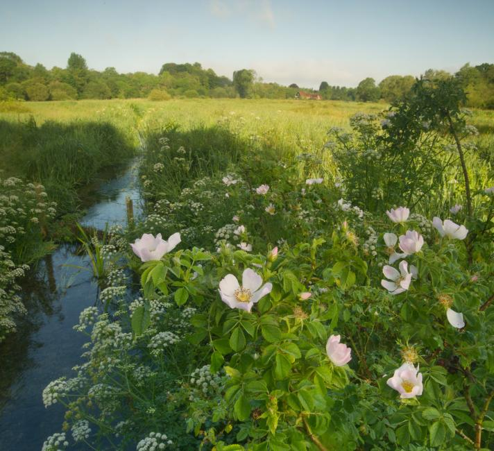 River Itchen chalk stream in Hampshire, UK