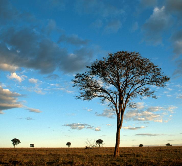 Dusk sets over the Cerrado, Brazil © National Geographic Stock / Scott Warren / WWF