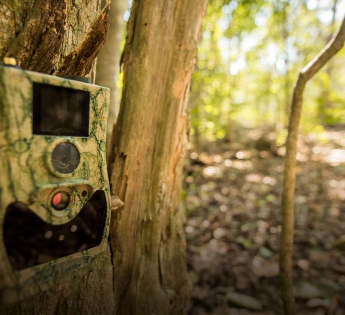 Camera trap on a tree