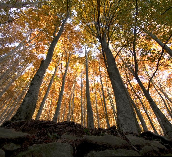 A Deciduous forest in autumn in Cilento National Park, Campania, Italy.