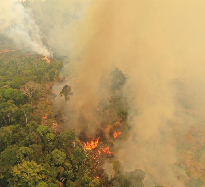 5 Ways To Help The Amazon Rainforest Wwf