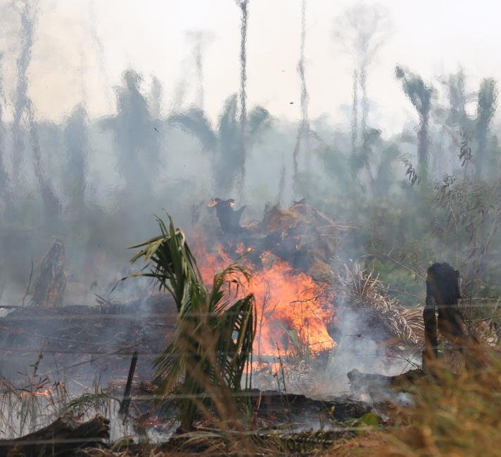 Fire at the Pacaás Novos National Park, in the Uru-Eu-Wau-Wau indigenous territory, at Rondônia (RN) state of Brazil.