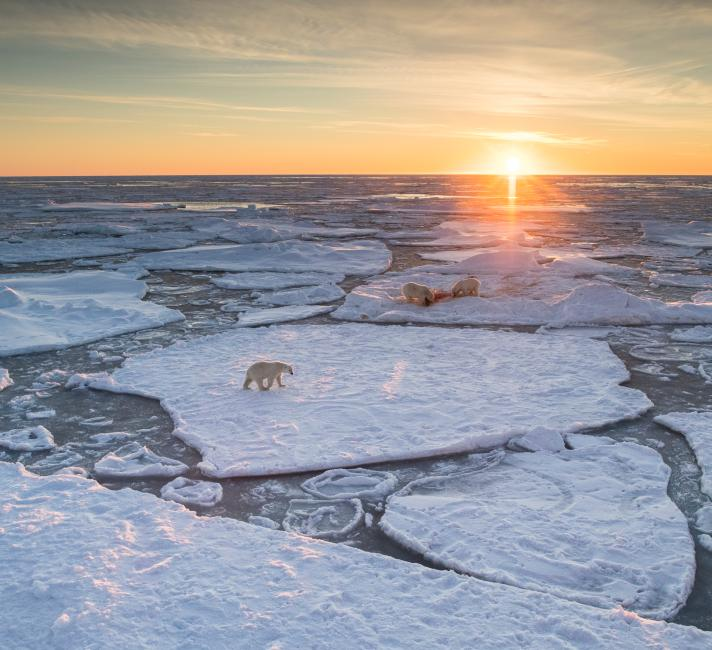 Polar bear (Ursus maritimus) on drifting ice, Svalbard, Norway, September. September