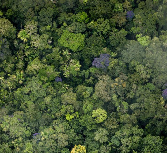 Aerial view of pristine forest, Colombia