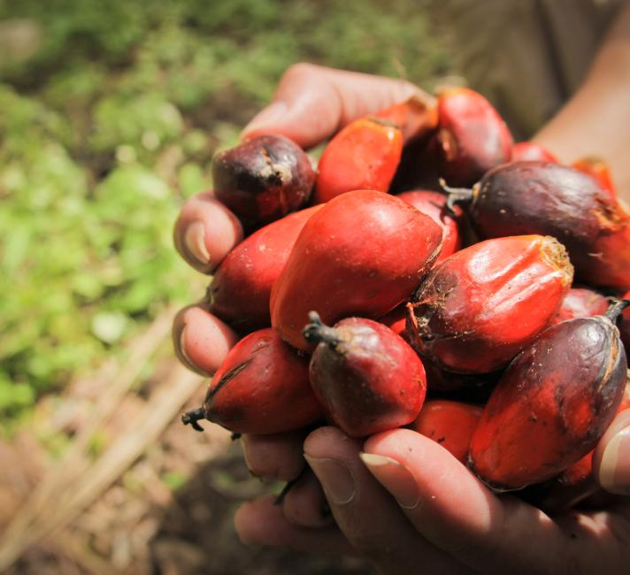 8 Things To Know About Palm Oil Wwf