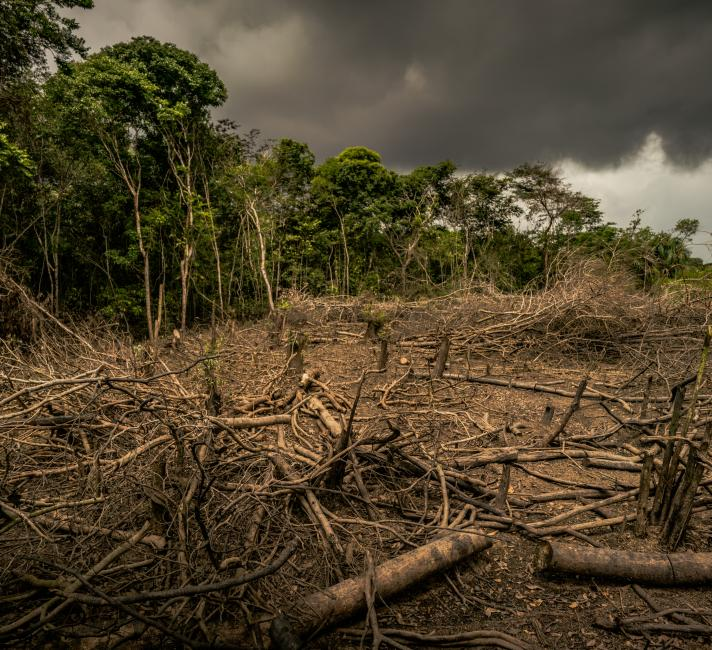 Amazon deforestation, Colombia