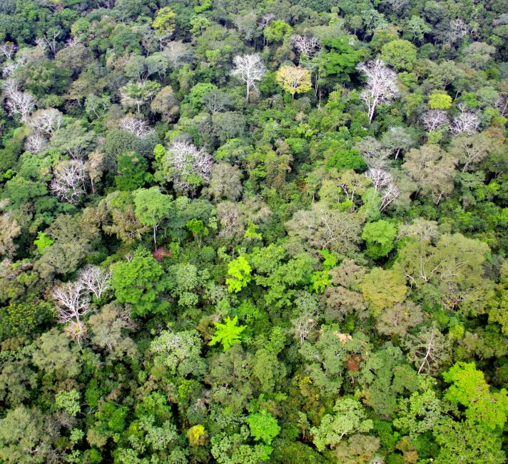 Aerial view of rainforest canopy, approaching Bayanga town, Central African Republic
