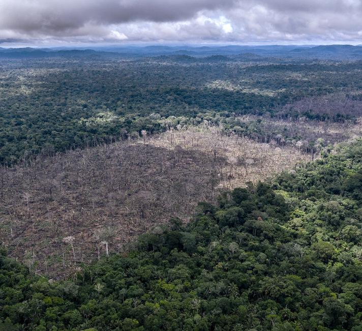 Illegal deforestation found in the indigenous Uru-Eu-Wau-Wau territory.