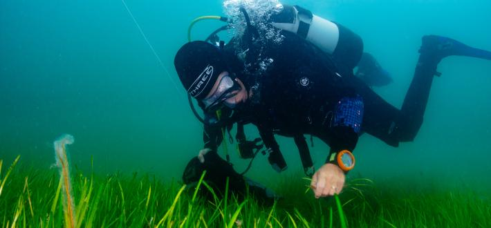 Planting Hope: Seagrass
