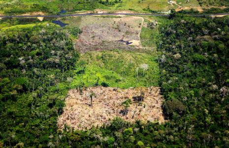 10 myths about deforestation