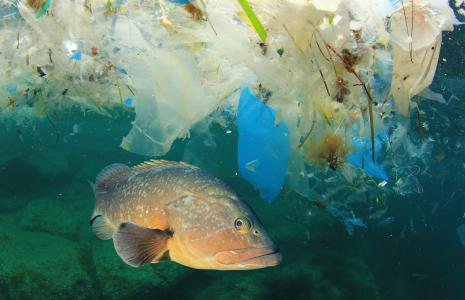 Oceans and Plastics Pollution