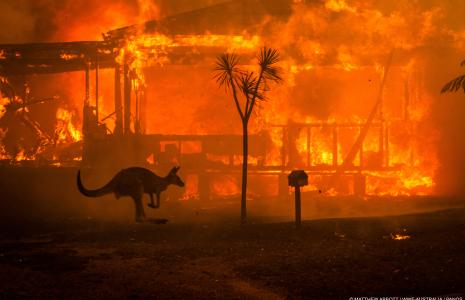 How you can help the Australia fires
