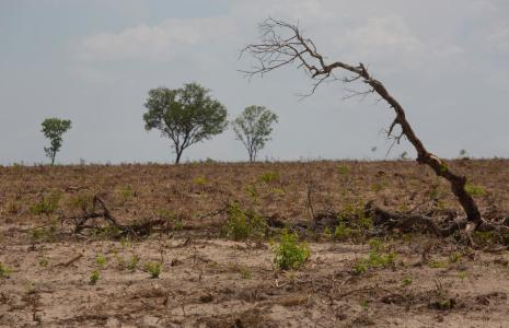 5 ways to fight deforestation