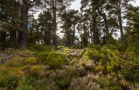 1. Deliver a significant expansion in Scotland's native woodlands annually from 2020