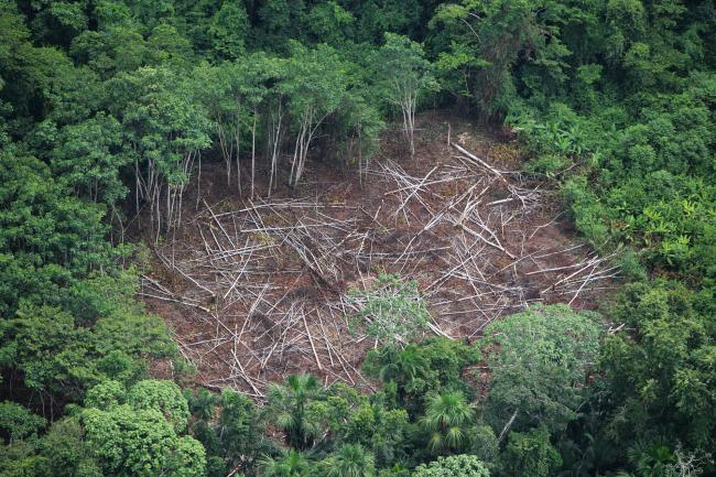 Aerial shot of deforestation in the Amazon, Peru.