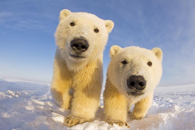 Image result for world wildlife fund animals