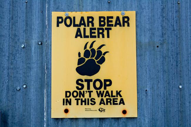 Polar bear warning sign