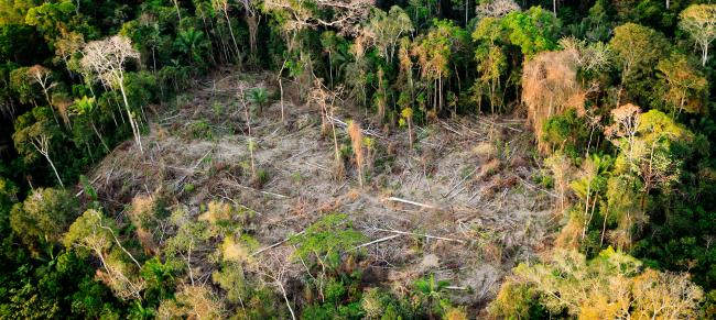 tackling forest loss and damage wwf